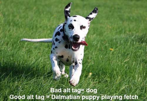 Dalmatian puppy playing fetch.